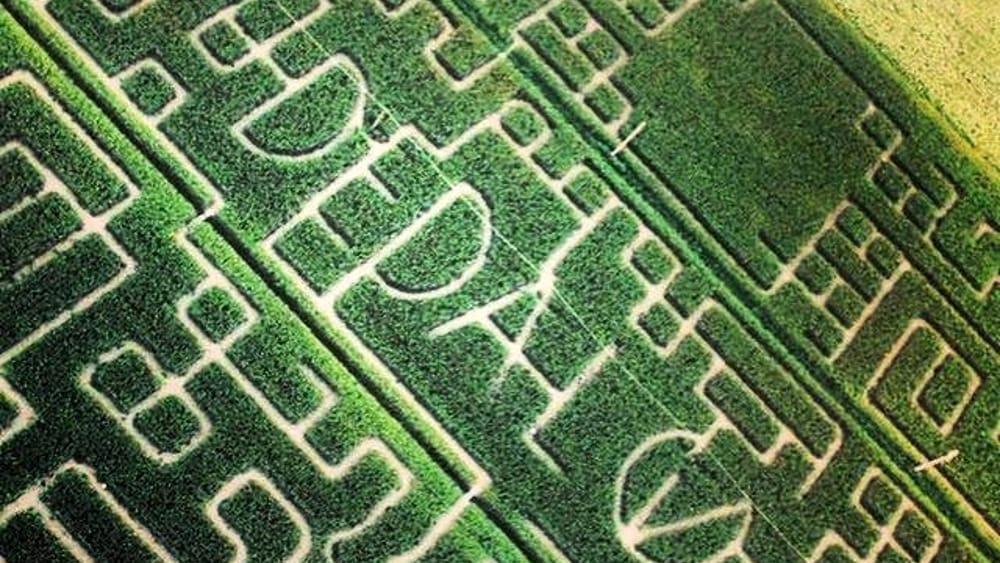Labirinto dedalo cene degustazioni e tanti eventi tra for Labirinto alfonsine